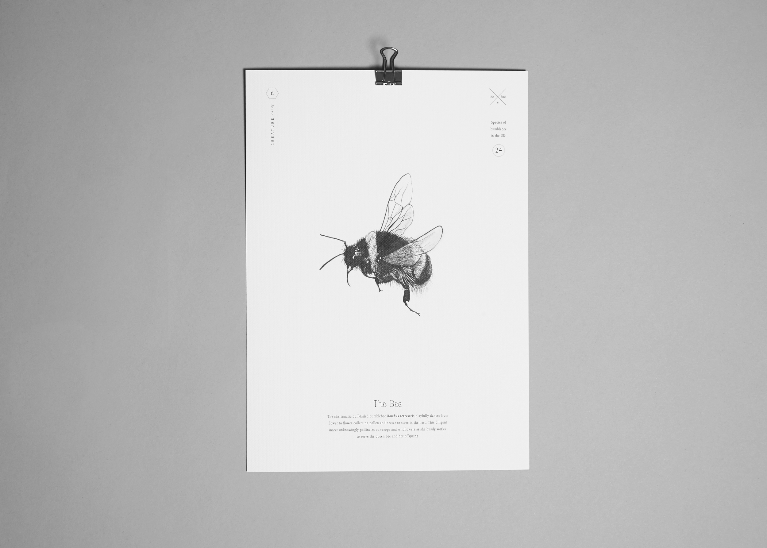 Creature Candy bee print