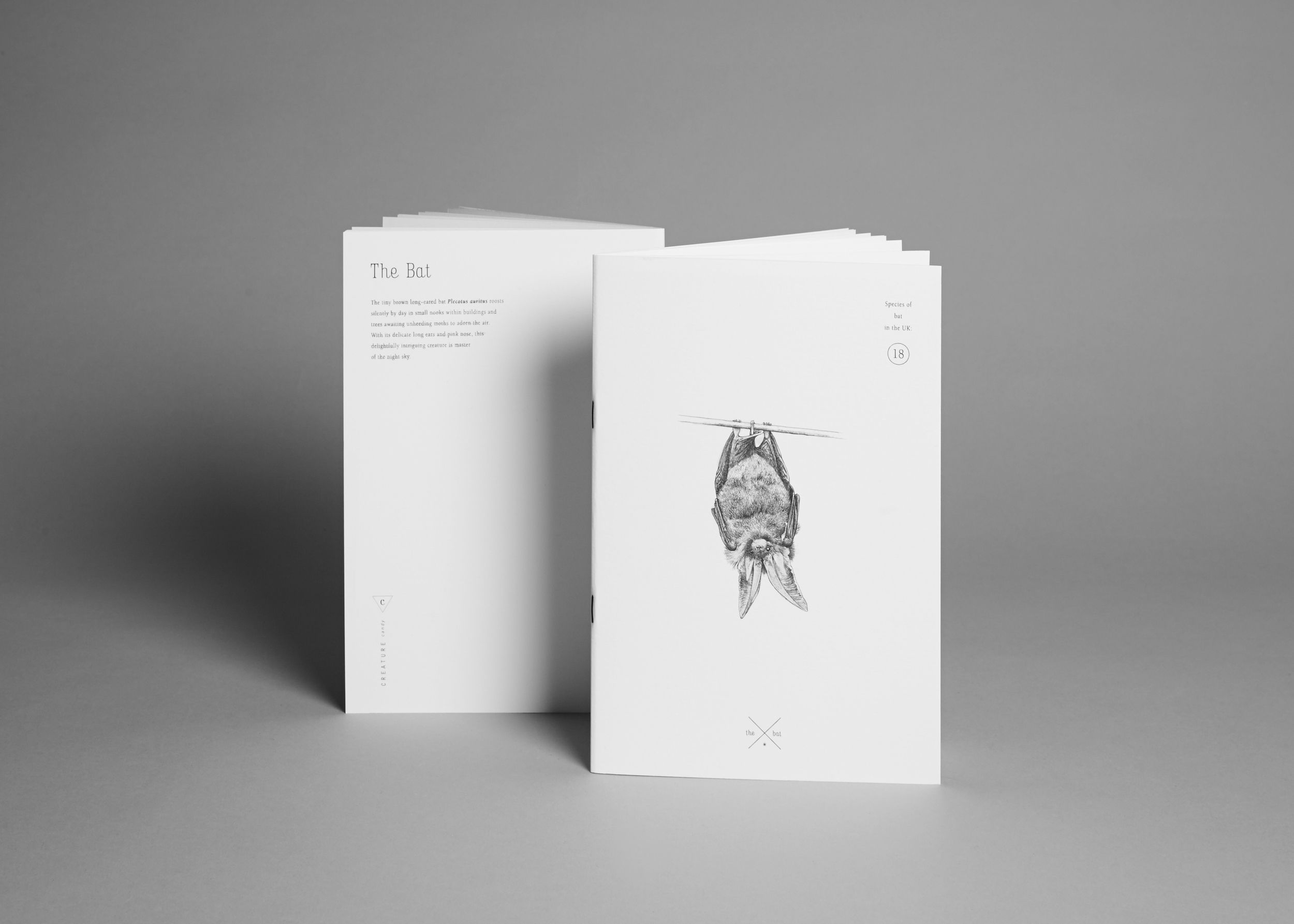 A5 bat notebook with plain paper £8.50 (including a £0.85 donation to the  Bat Conservation Trust )