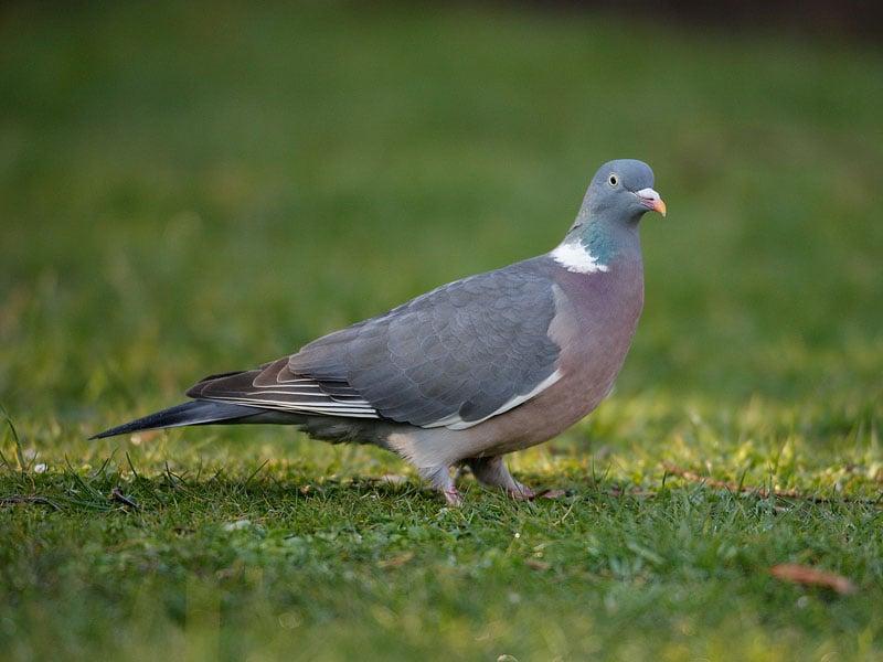 Image - wildbirdseeds.co.uk