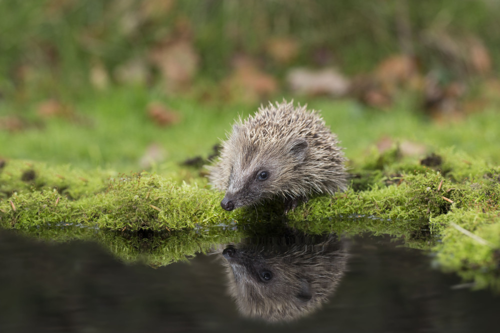 Credit: People's Trust for Endangered Species