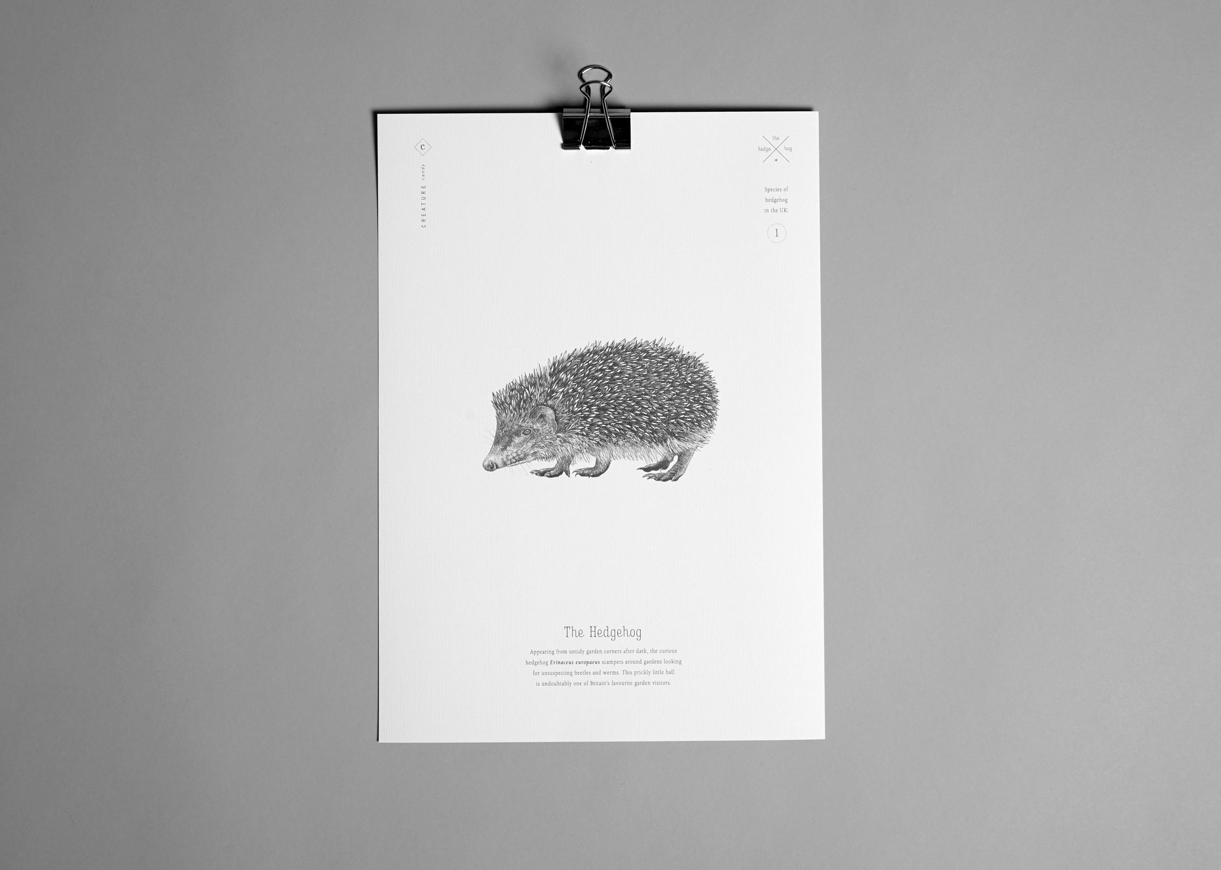 A4+Print-Hedgehog.jpg