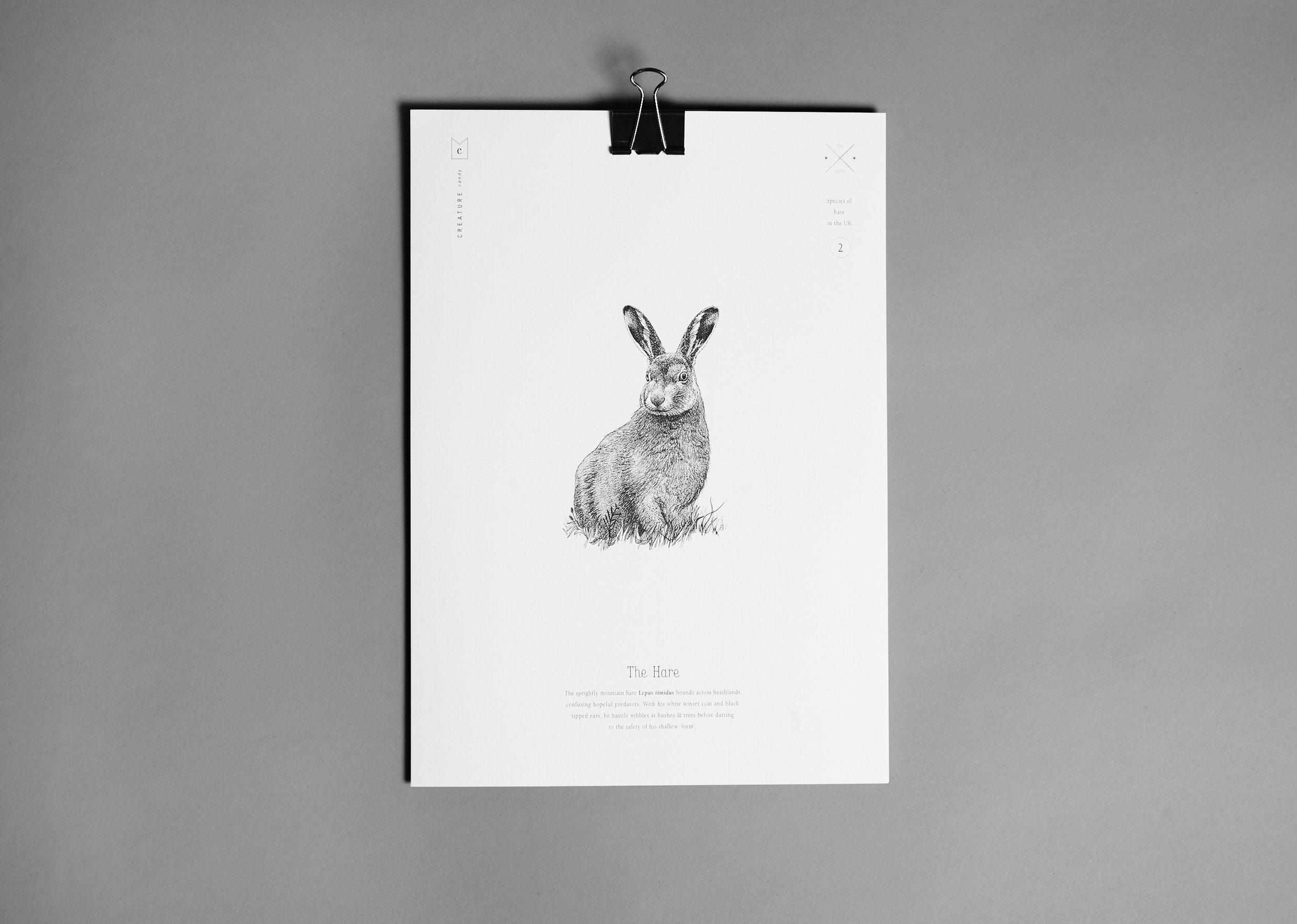 Print-Hare.jpg