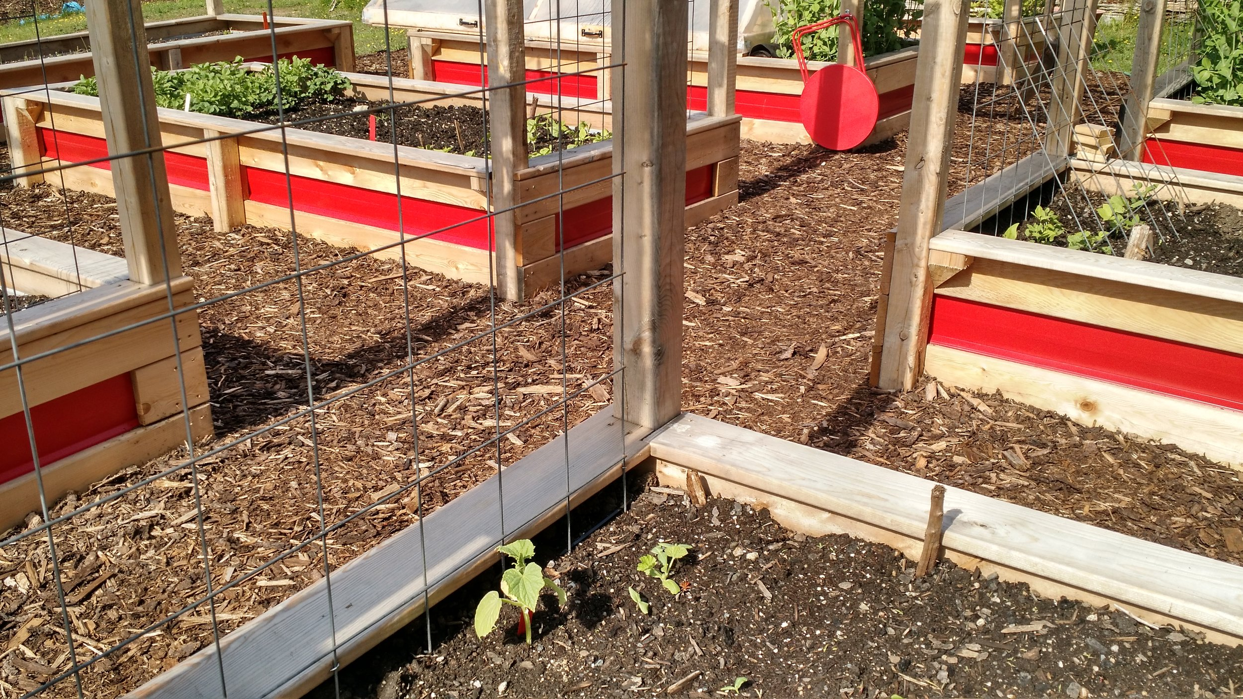 A quick pic of the beds. Some things are starting to come up...slowly, slowly. Others are in full-on grow mode - like the peas!