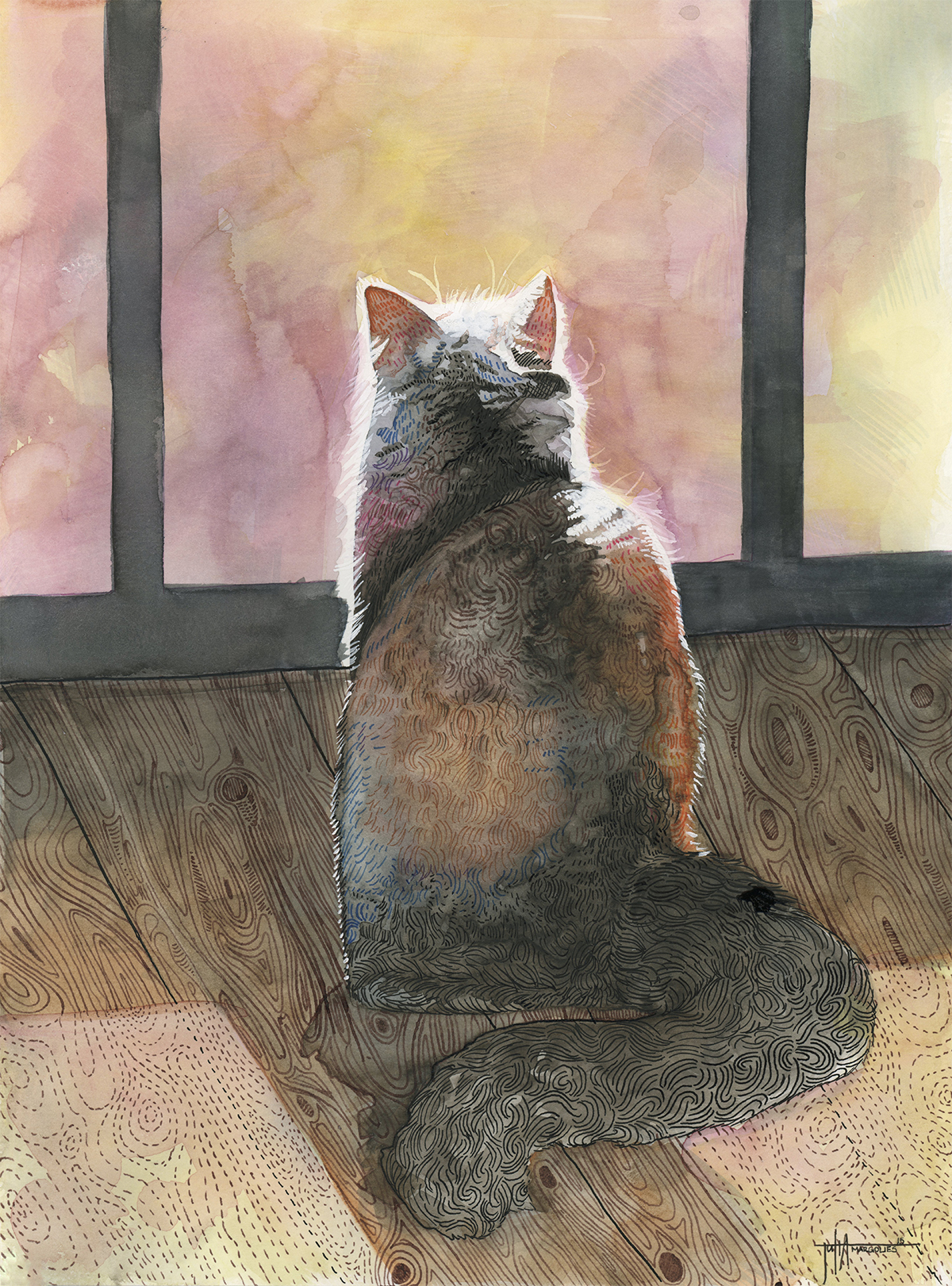 sunset cat.jpg