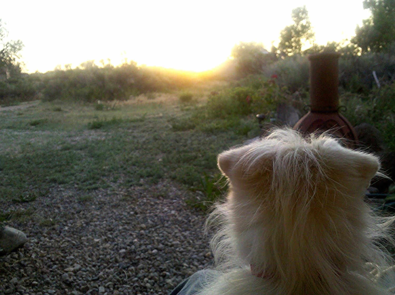 Kogan does Sunset.jpg