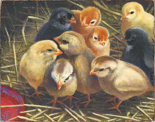 Chicks - PG366