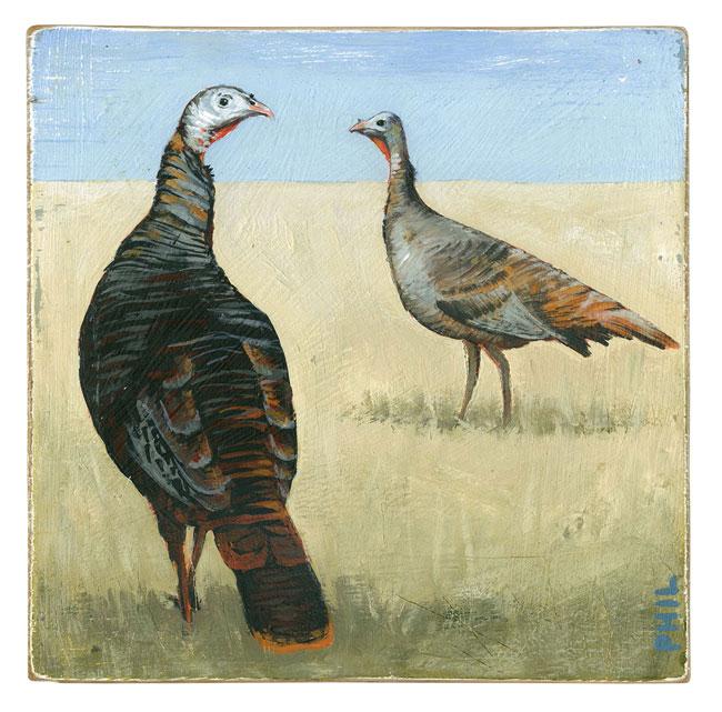 Wild Turkeys - PG381