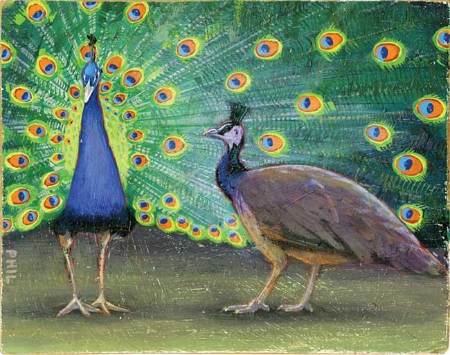 Peacocks - PG388