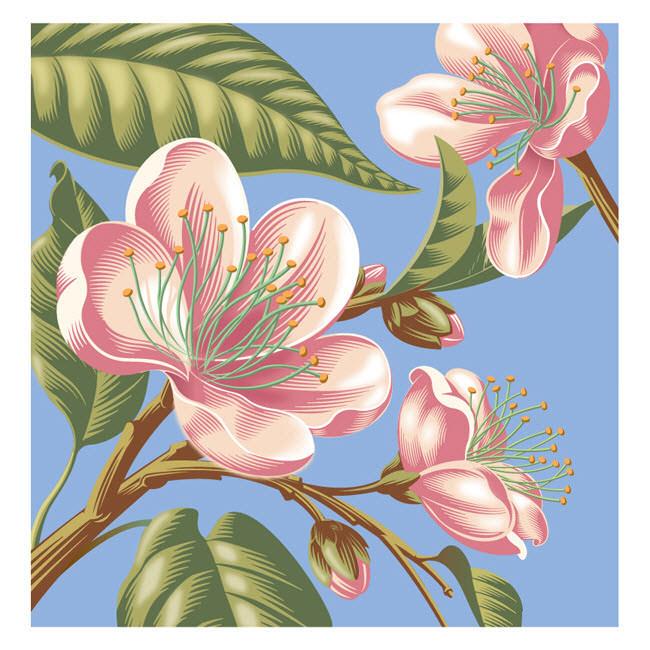 Blossom in Blue - GA647