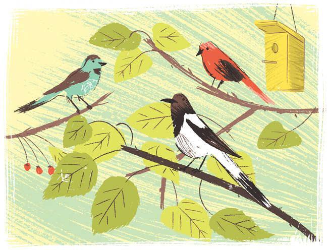 Bird Watching - KD387