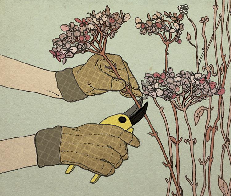 Hydrangea Pruning - JD316