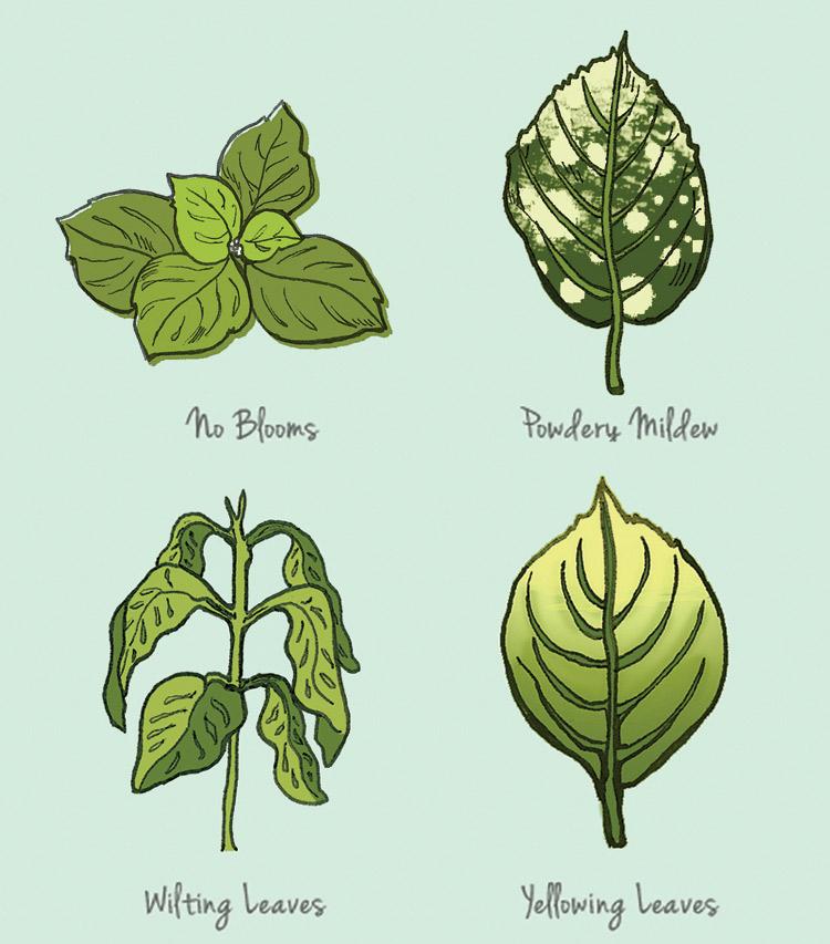 Leaf Diagrams - JD318