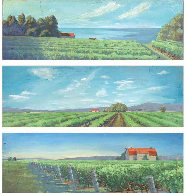 Vineyards - PG351