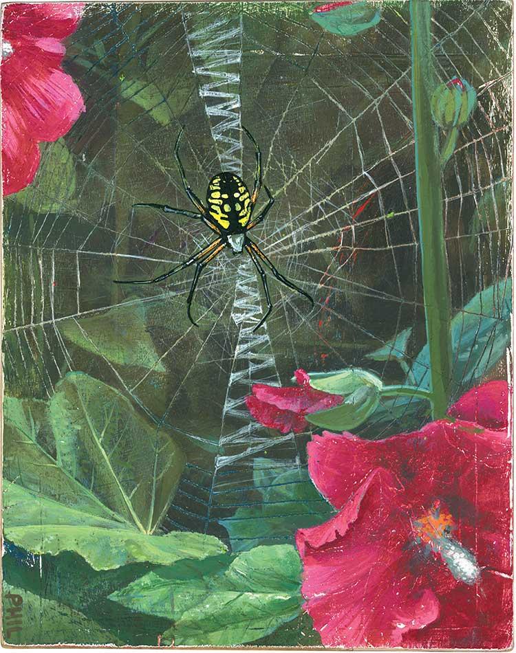 Spiderweb - PG364