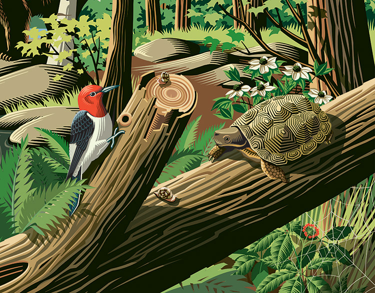 Biodiversity - GA485