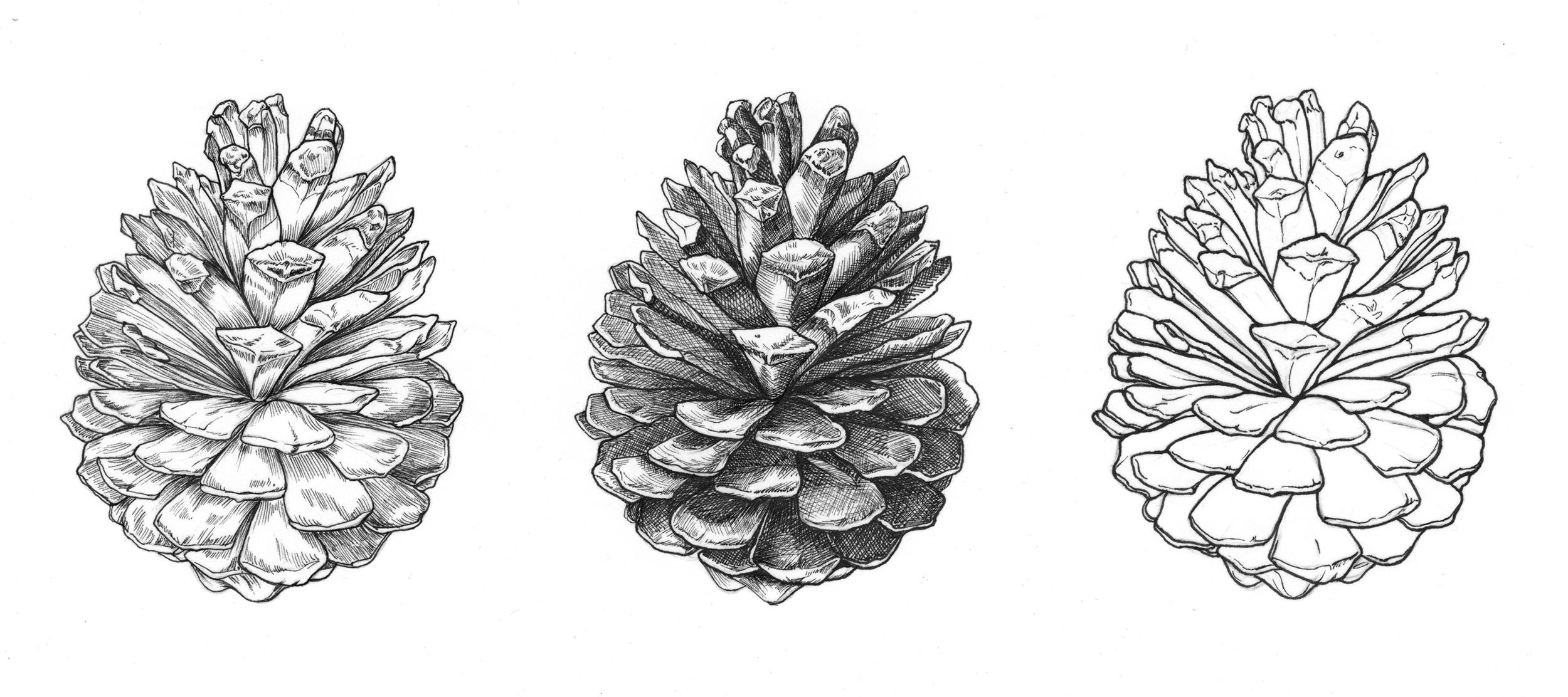 Pinecones - JD379