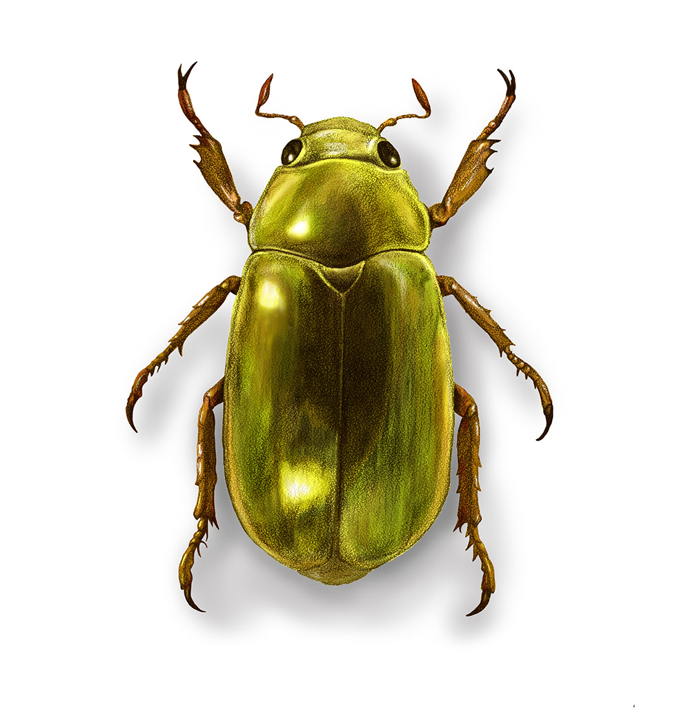 Jewel Scarab, Digital