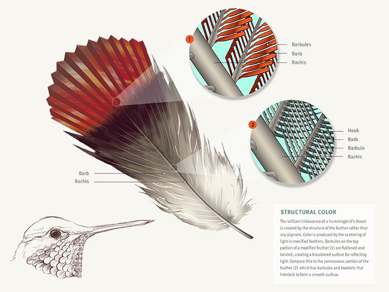Feather Deconstruction - JD364