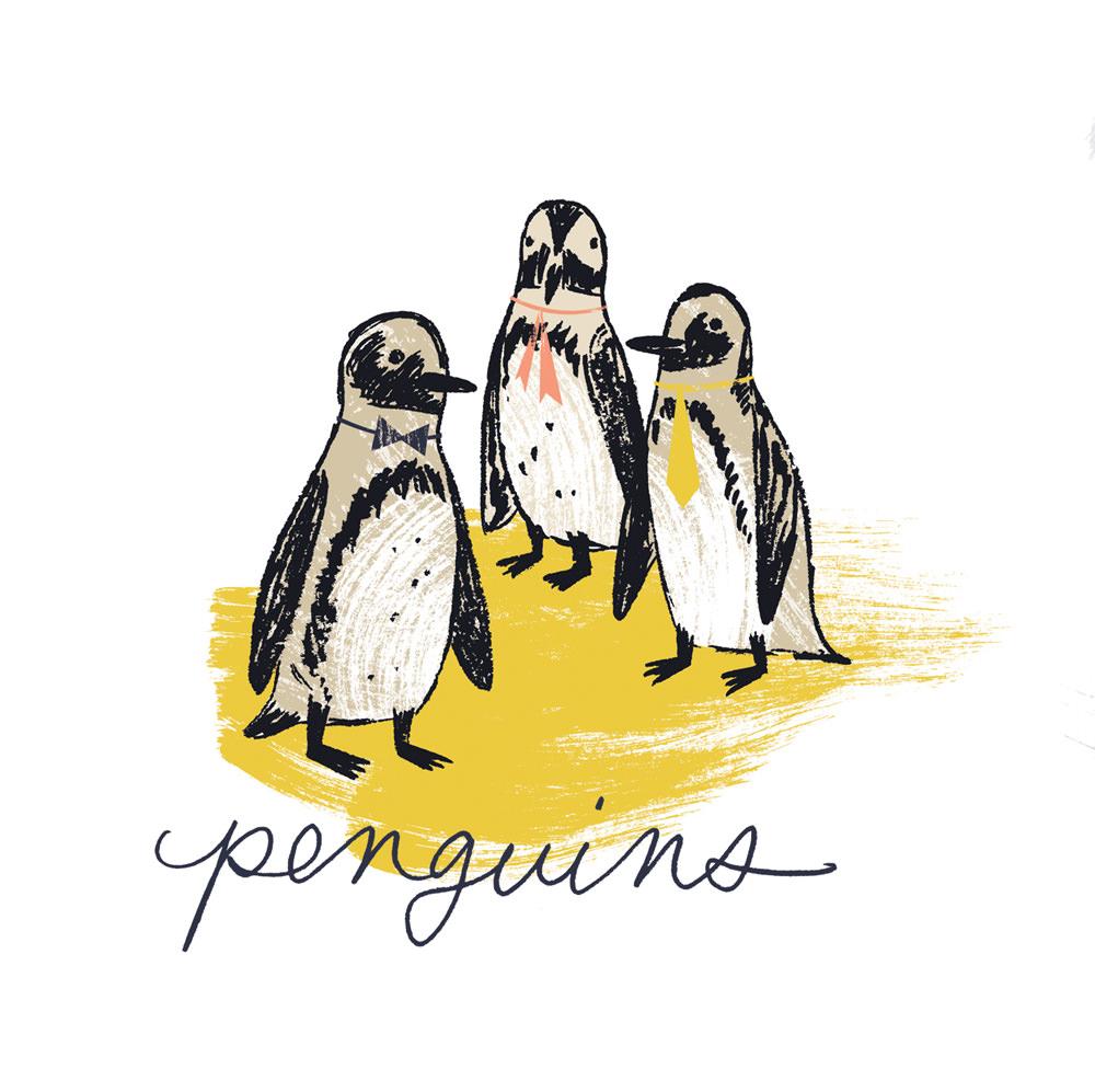 Penguins - KD490
