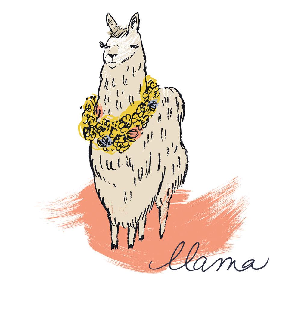 Llama - KD491