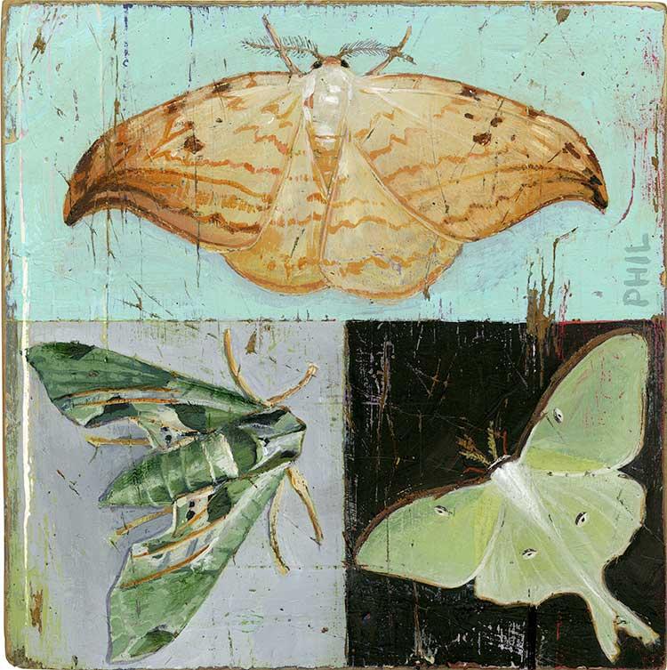 Moths - PG430