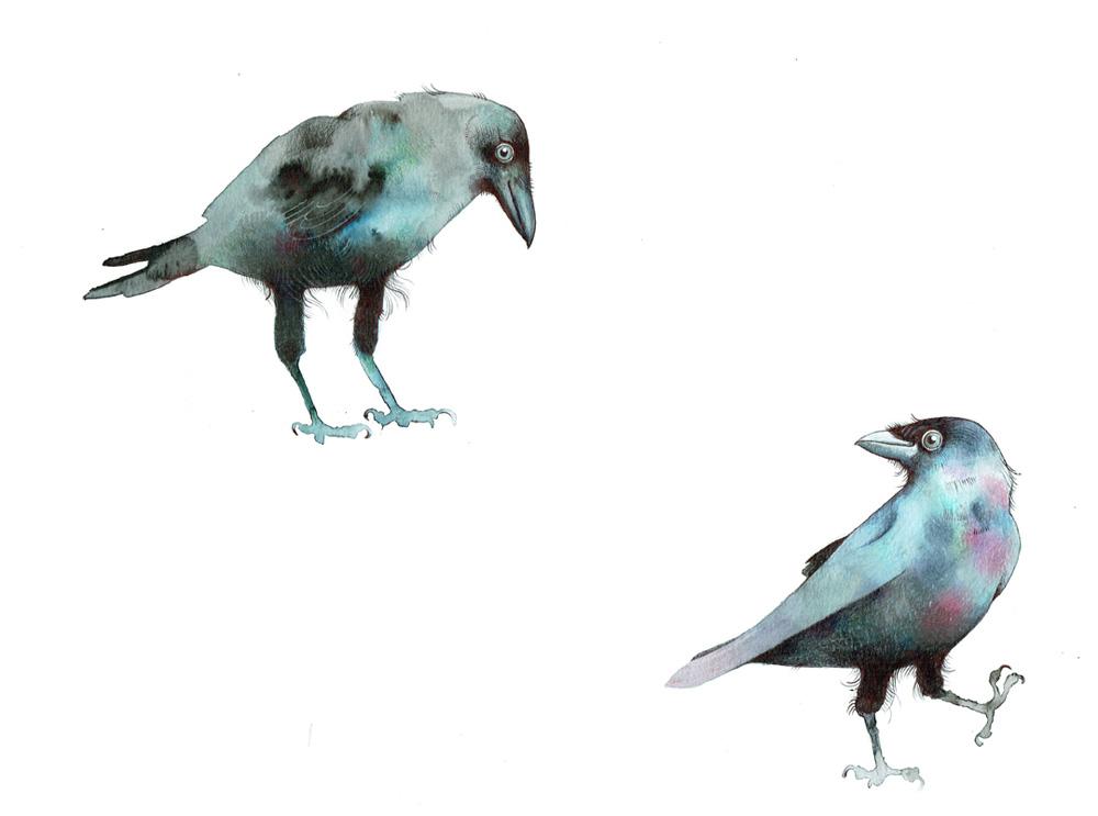 Crows - TB148