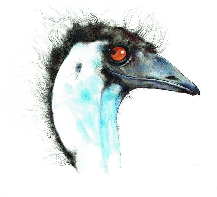 Emu - TB144