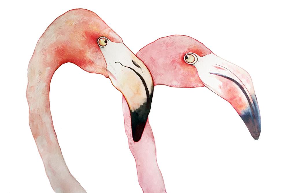 Flamingos Talya Baldwin Illustration
