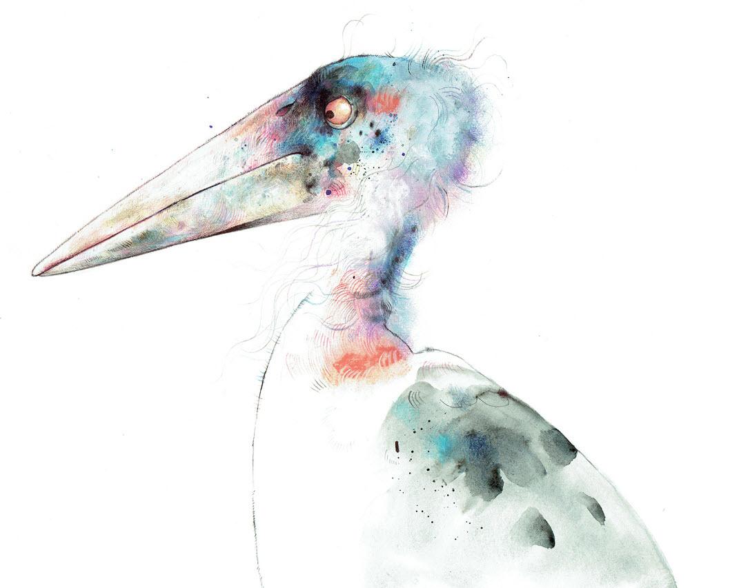 Marabou Stork - TB121