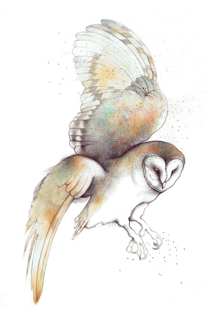 Barn Owl - TB181
