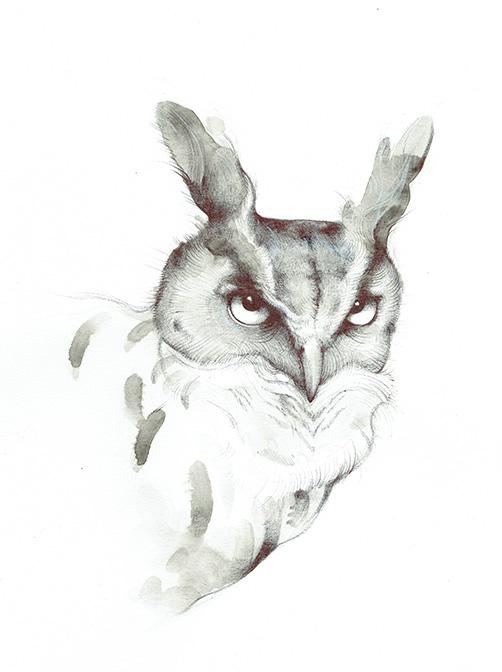 Barn Owl II - TB182