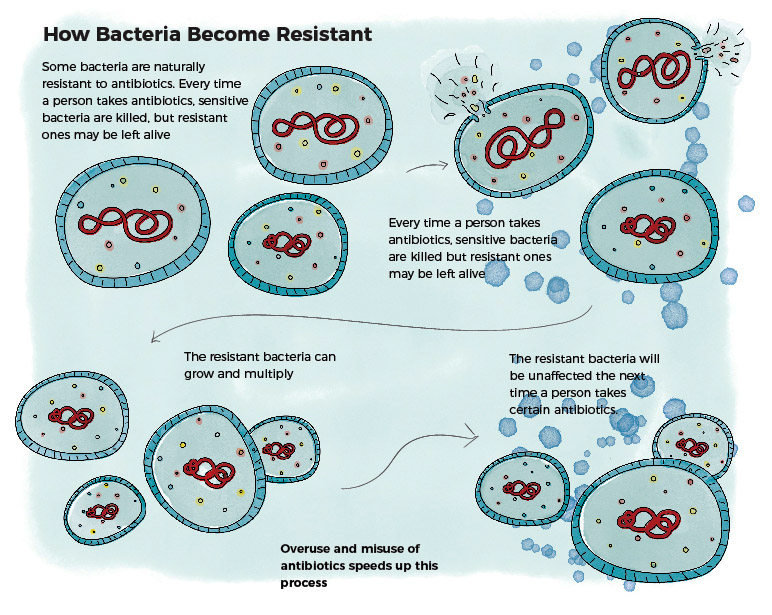 Bacteria Resistance Jillian Ditner Illustration
