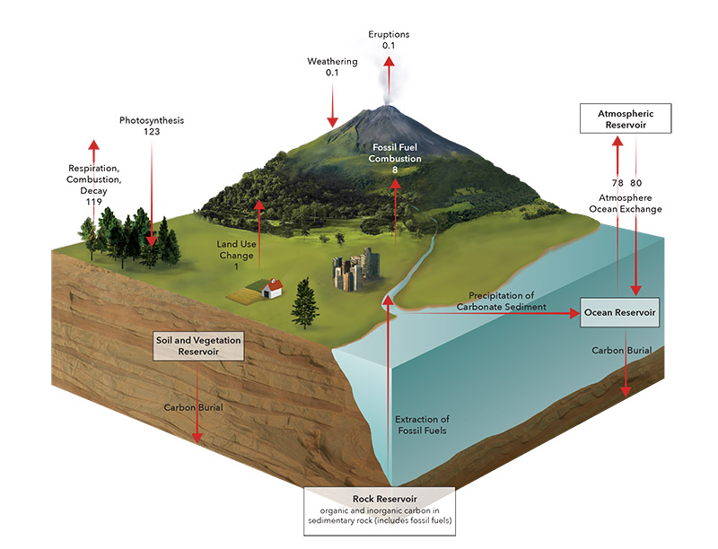 Carbon Cycle - JD395
