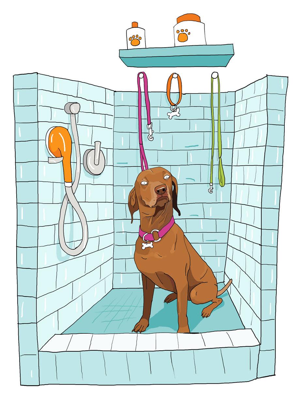 Dog Bath - MM869