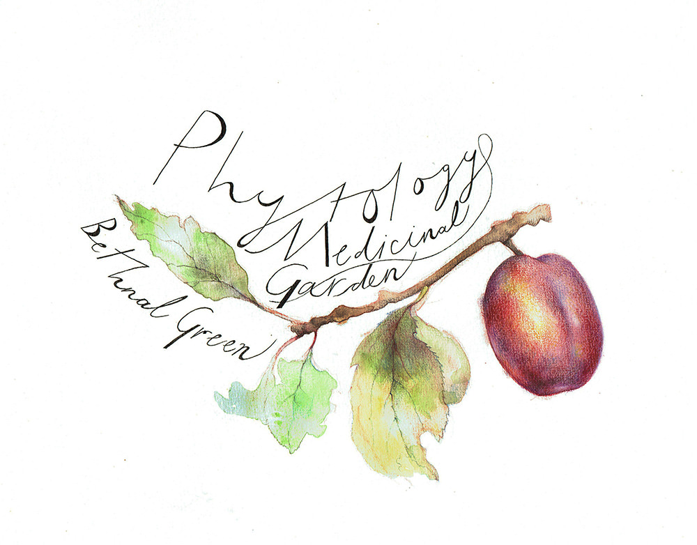 Plum Fruit - TB197