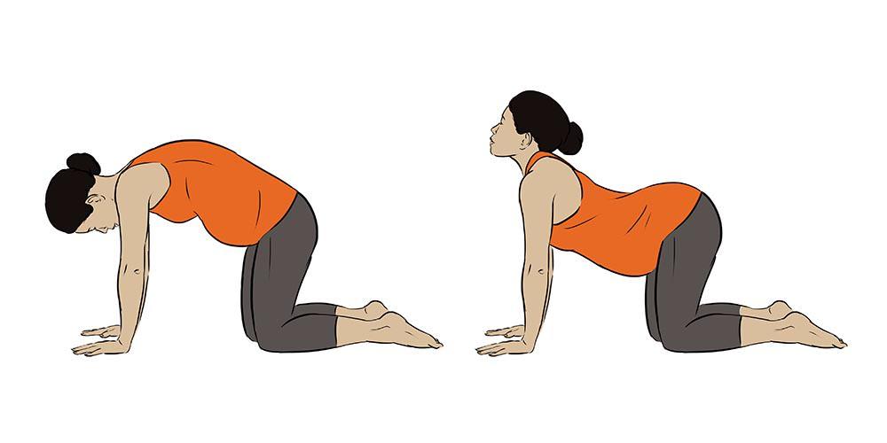 Cat Cow Yoga Poses. Inside Illustration by Jillian Ditner for Chronicle Books book, Nurture.