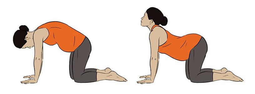 Cat Cow Yoga Pose. Illustration by Jillian Ditner. Represented by i2i Art Inc.