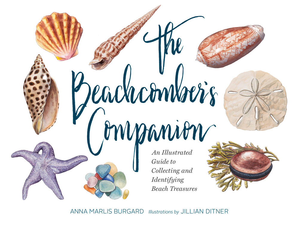 The Beachcomber's Companion Cover. Illustration by Jillian Ditner.
