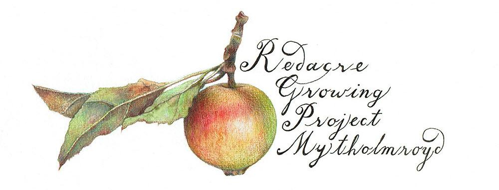 Illustration by Talya Baldwin. Redacre Growing Project.