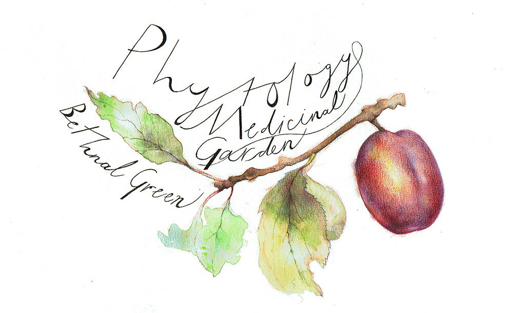 ©Talya Baldwin Phytology Medicinal Garden Illustration