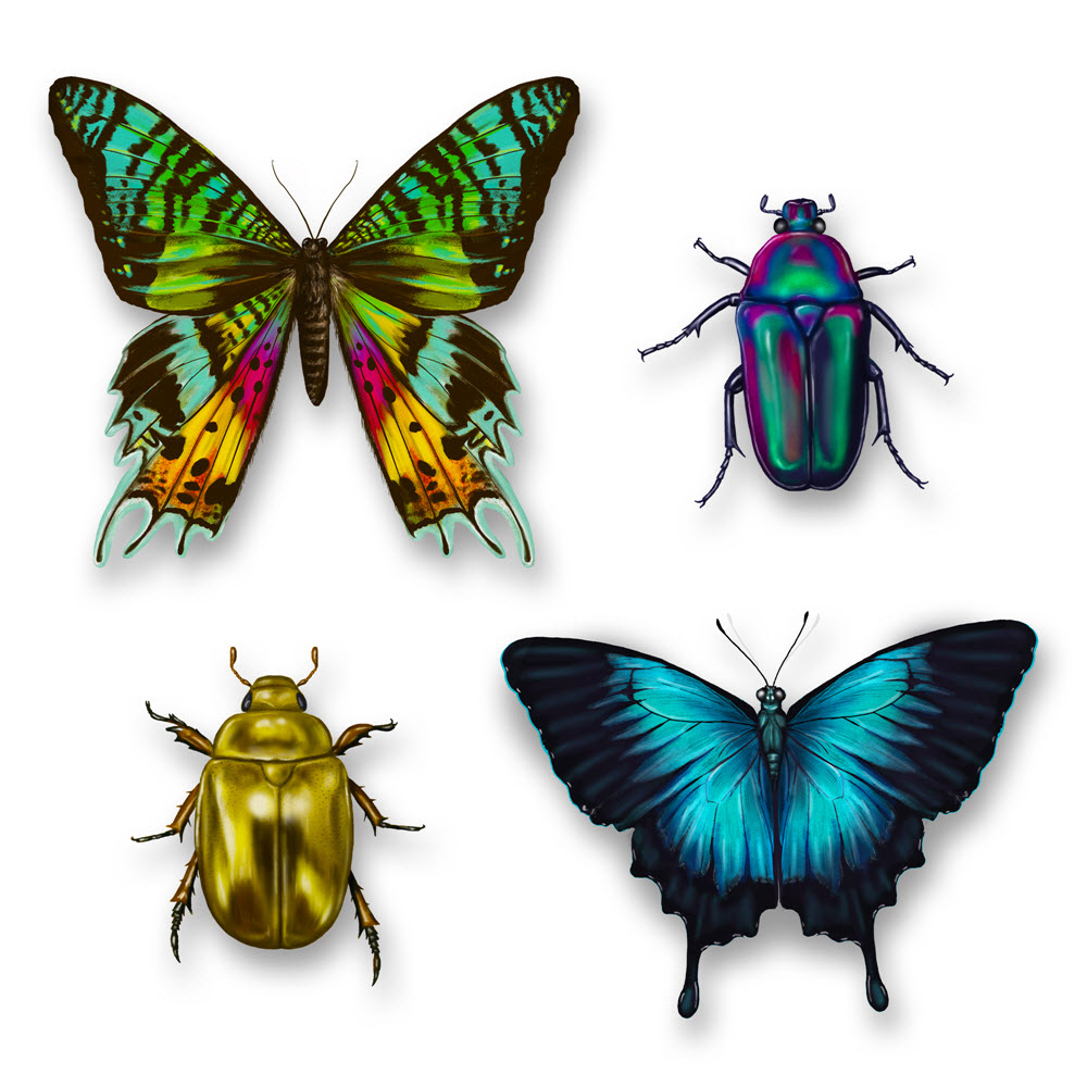 ©Jillian Ditner Illustration Beetles and Butterflies