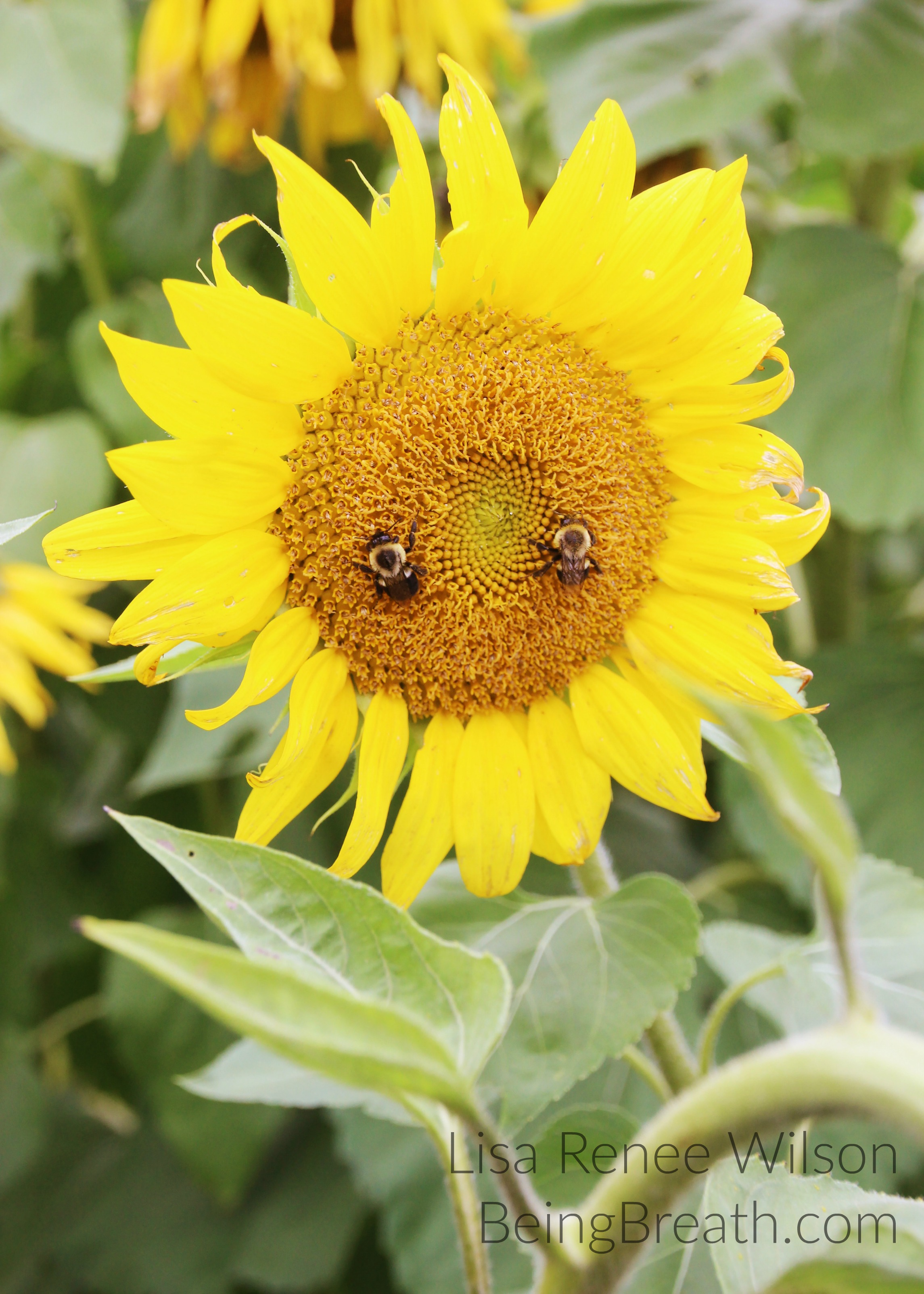Art_Photo_WM_IMG_5668_HappySunflower.jpg