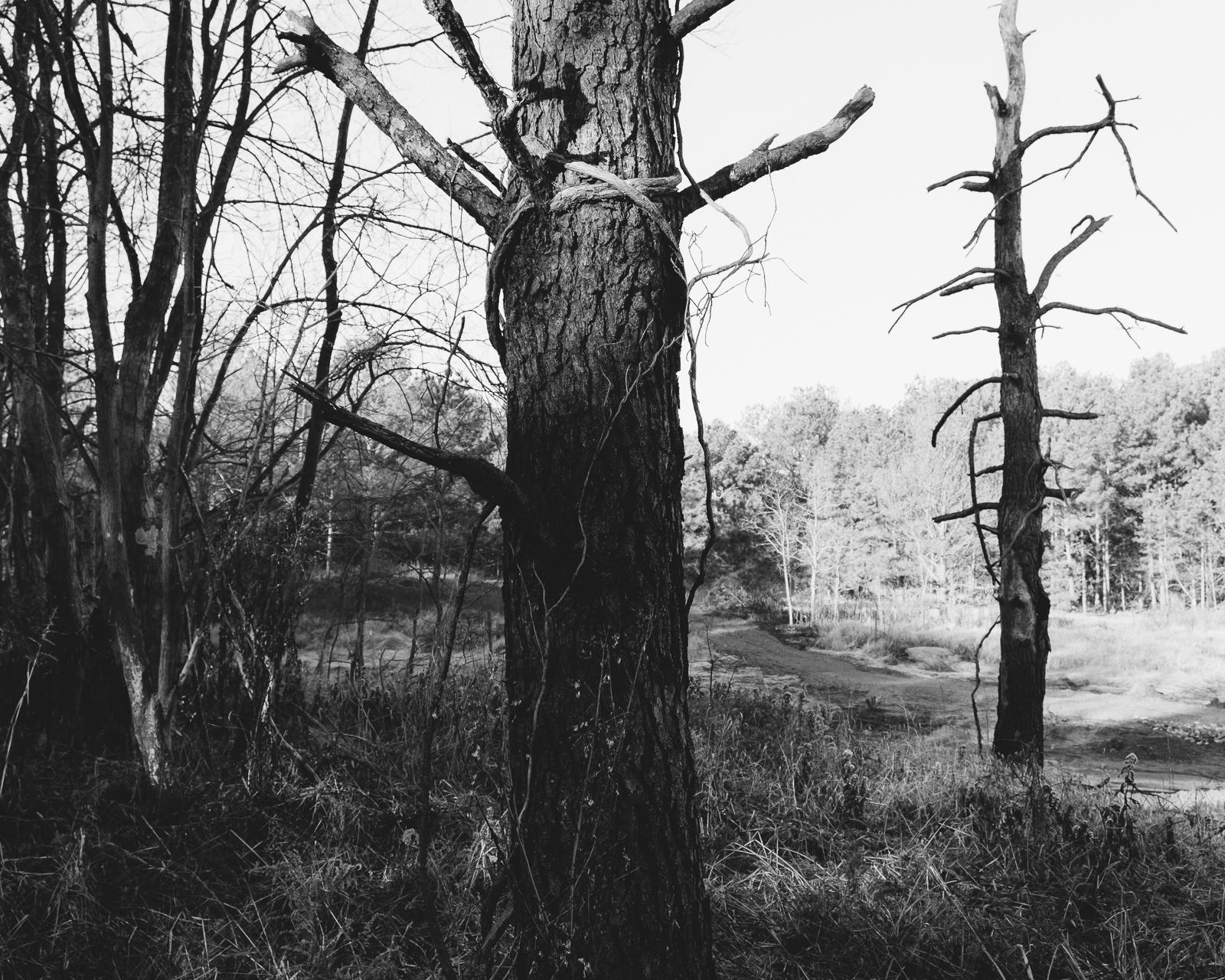 Jordan Lake, North Carolina, 2015-3.jpg