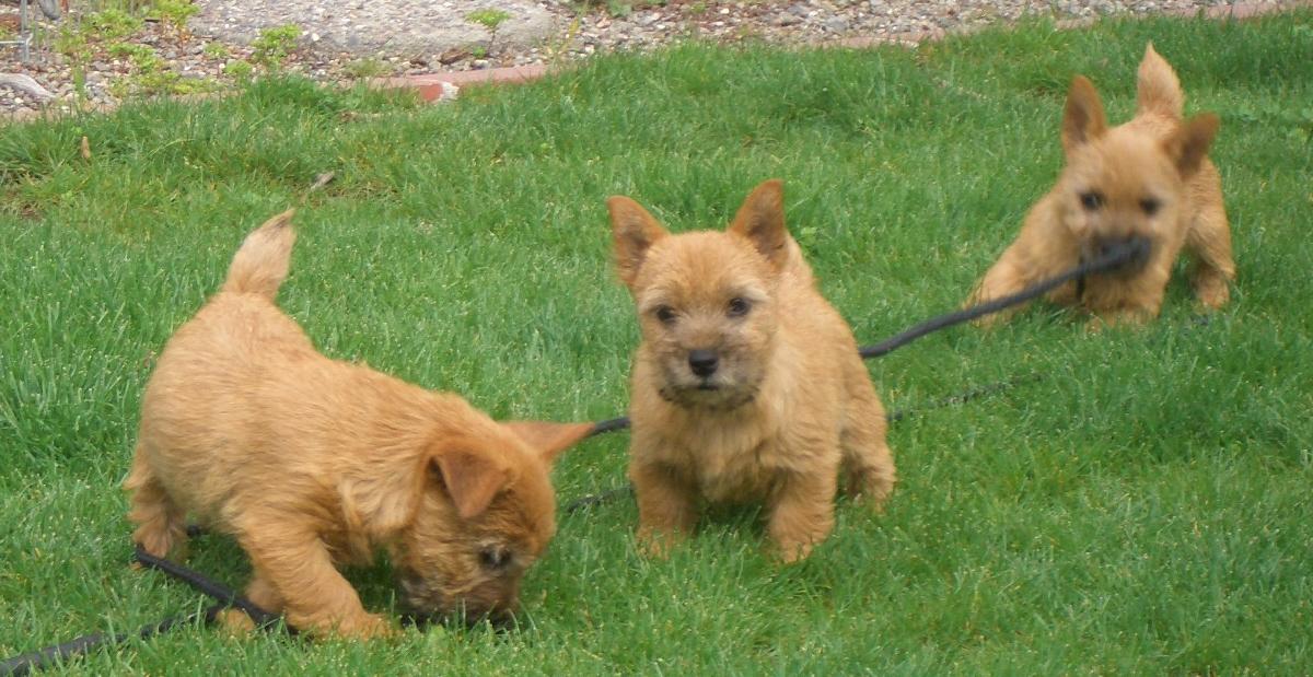Puppy tug-of-war.jpg