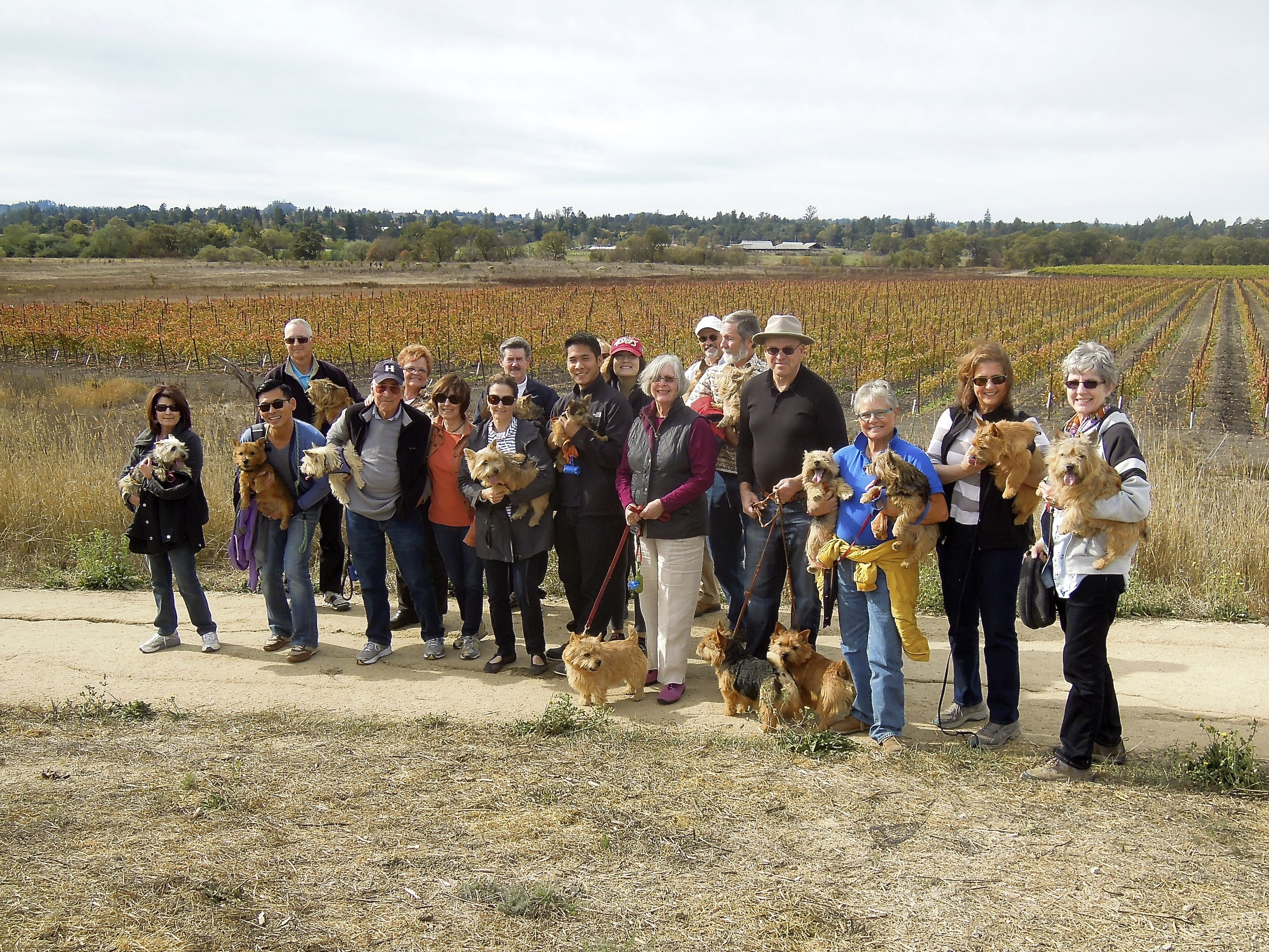 Dog walkers at Balletto Winery 2013.jpg