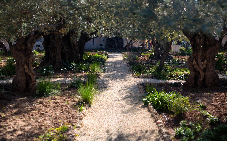 Garden of Gethsemenie