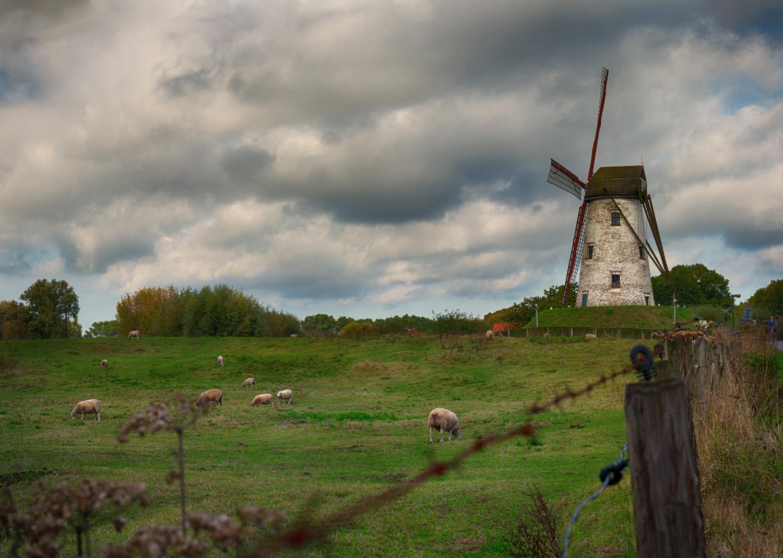 Windmill5.jpg