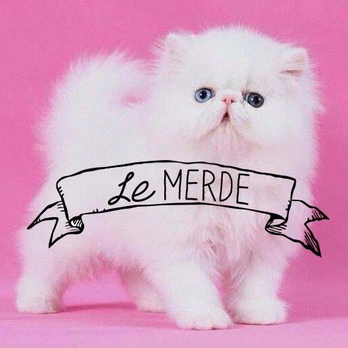 Lemerde_kittycat.jpg
