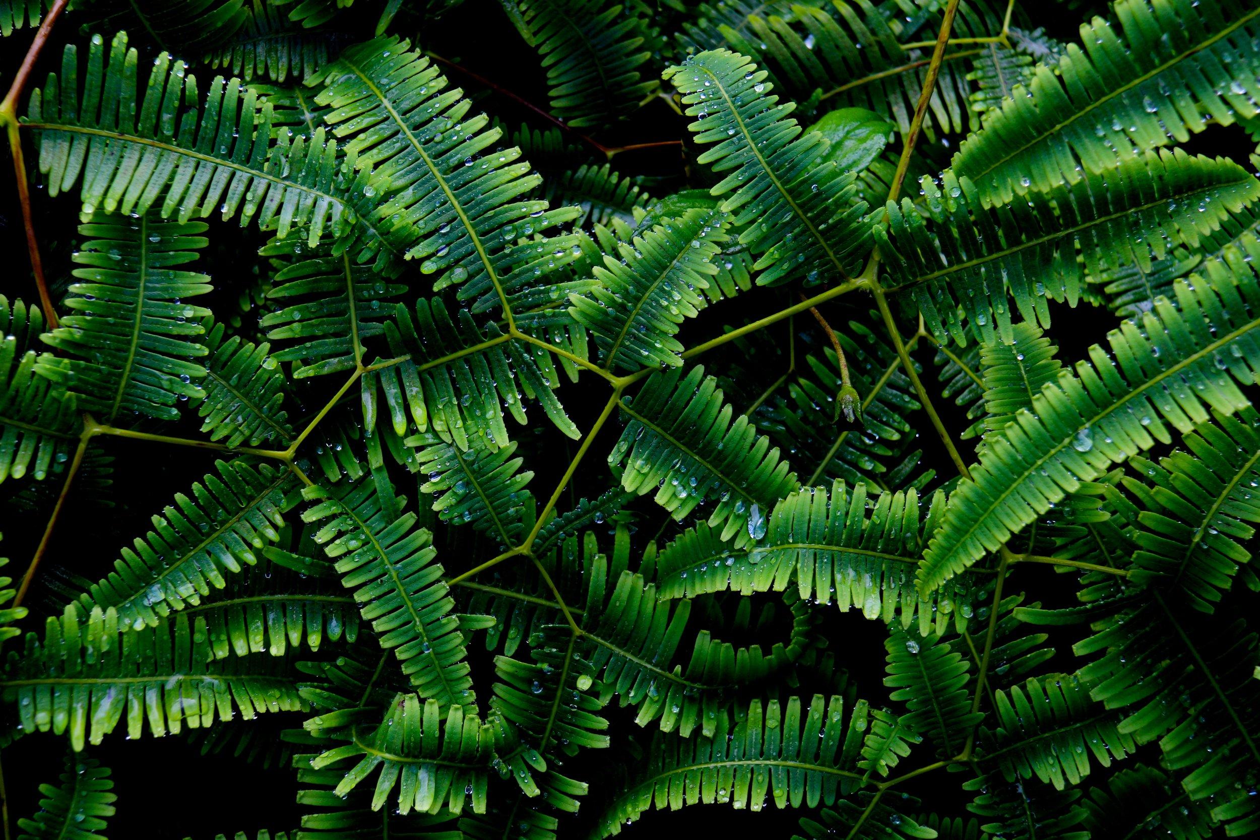 island foliage  published on: vogue italia