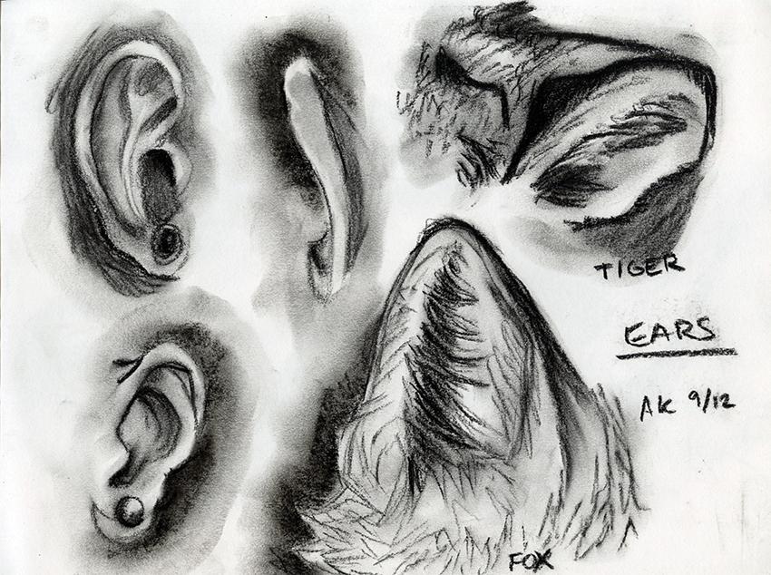 Charcoal Study_Ears_SM.jpg